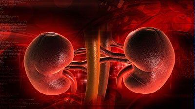 合理使用药物,保护好肝肾